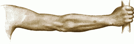 drawing of full arm (Gray's Anatomy)